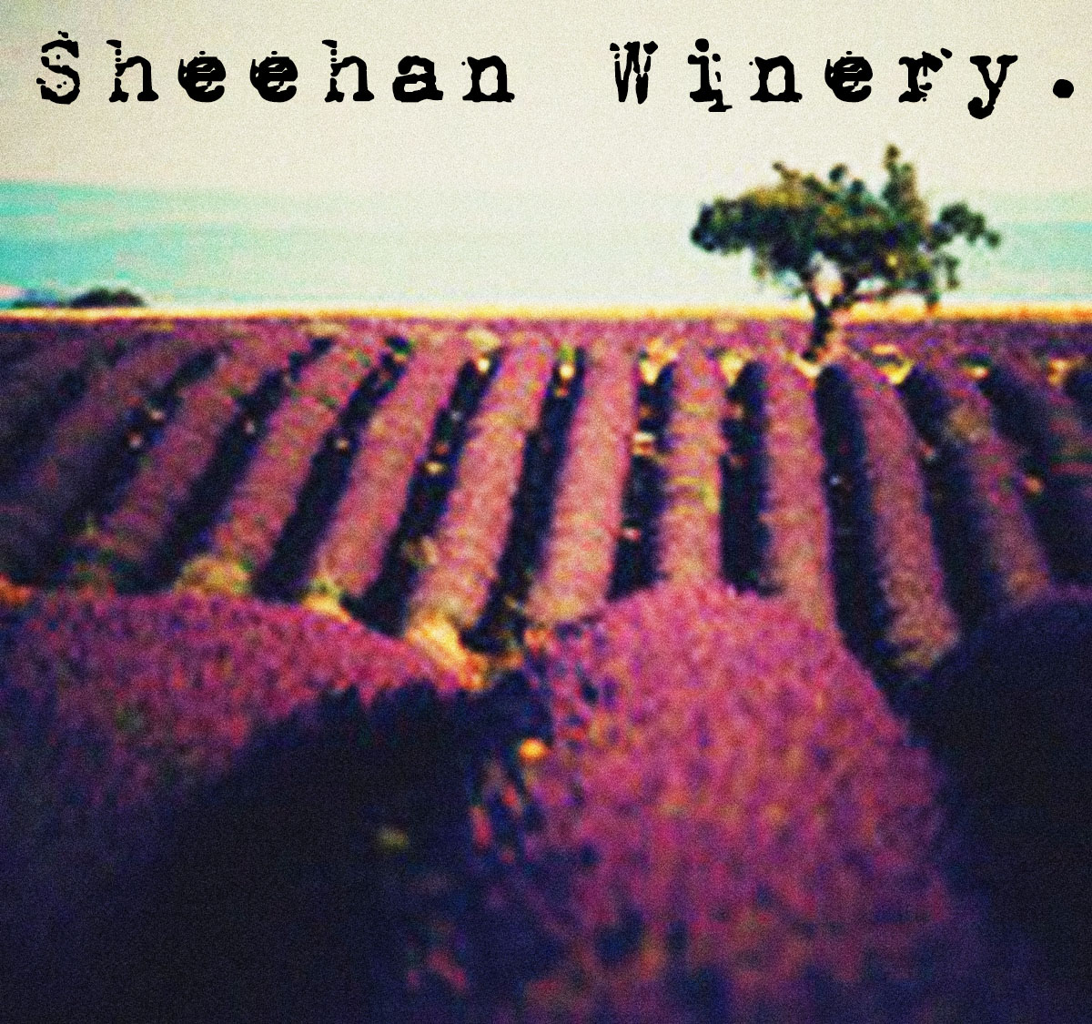 Sheehan Winery